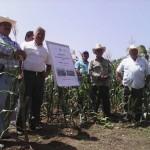 Siembran 10 hectáreas con variedad zapalote; con degustación culinaria muestran resultados