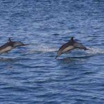 Desaparecen en 50 años al menos 15 mamíferos mayores en el país