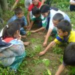 Al construir una huerta, en una escuela bajaron el grado de violencia