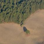Aguacateros michoacanos han arrasado con más de 65 mil hectáreas de bosques
