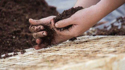 Preparando semilleros (Usuario Flickr: Asociacion Alxaraf)