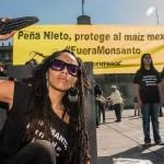 Exígele a Enrique Peña Nieto la prohibición de las siembras de maíz transgénico
