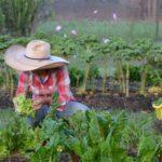 Cadenas cortas en un marco de políticas públicas agropecuarias excluyentes y algo tóxicas