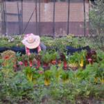 Agroecosistemas y su eficiencia.