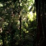 Indignación: Denuncian destrucción acelerada de la última selva mexicana