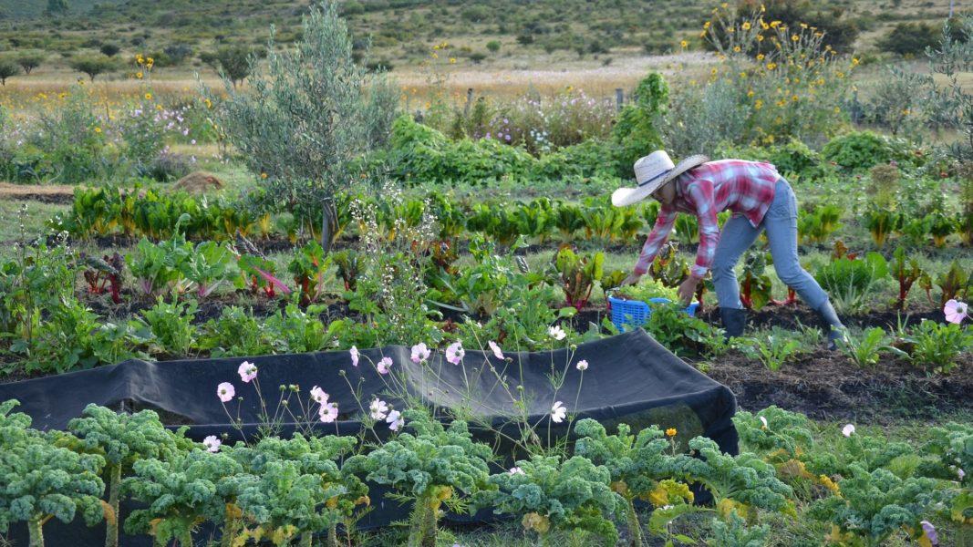 Jardines ecol gicos v a org nica for Antorchas para jardin precio