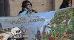 ONG: impulsan funcionarios siembra de soya genéticamente modificada en Campeche
