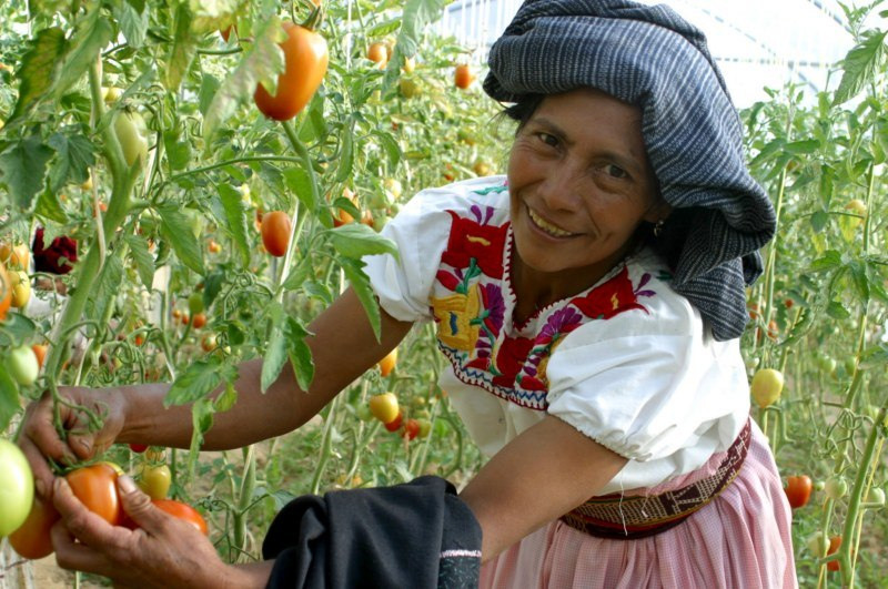 agricultura-mexicana