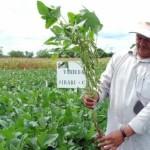 Anula Corte permiso a Monsanto para producir soya transgénica