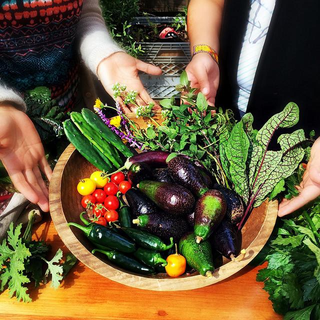 Cosecha de productos orgánicas. Por Vía Orgánica.