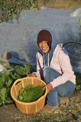 Cosecha de Kale en la Granja Vía Orgánica.