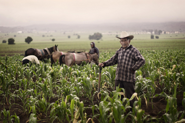 """Fotografía titulada """"Orgullo"""", Apoyemos a nuestros campesinos (Usuario Flickr: ibz_omar)"""