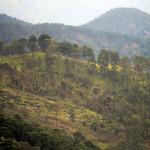 Se pierden al año 175 mil hectáreas de bosques
