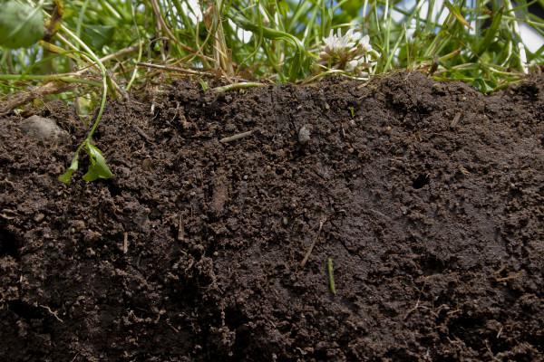 Con agricultura regenerativa organica podemos captar varios billones de toneladas de carbono en exceso, desestabilizador del clima de la atmósfera de regreso al suelo.