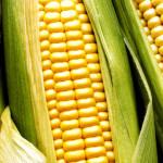 En defensa del maíz, otra vez