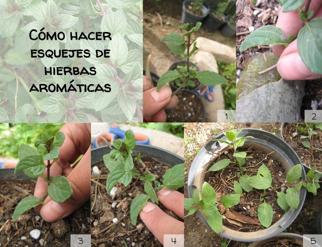 T cnicas para cultivar hierbas arom ticas en casa v a - Jardines con plantas aromaticas ...