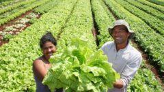 La agricultura familiar produce el 80% de los alimentos