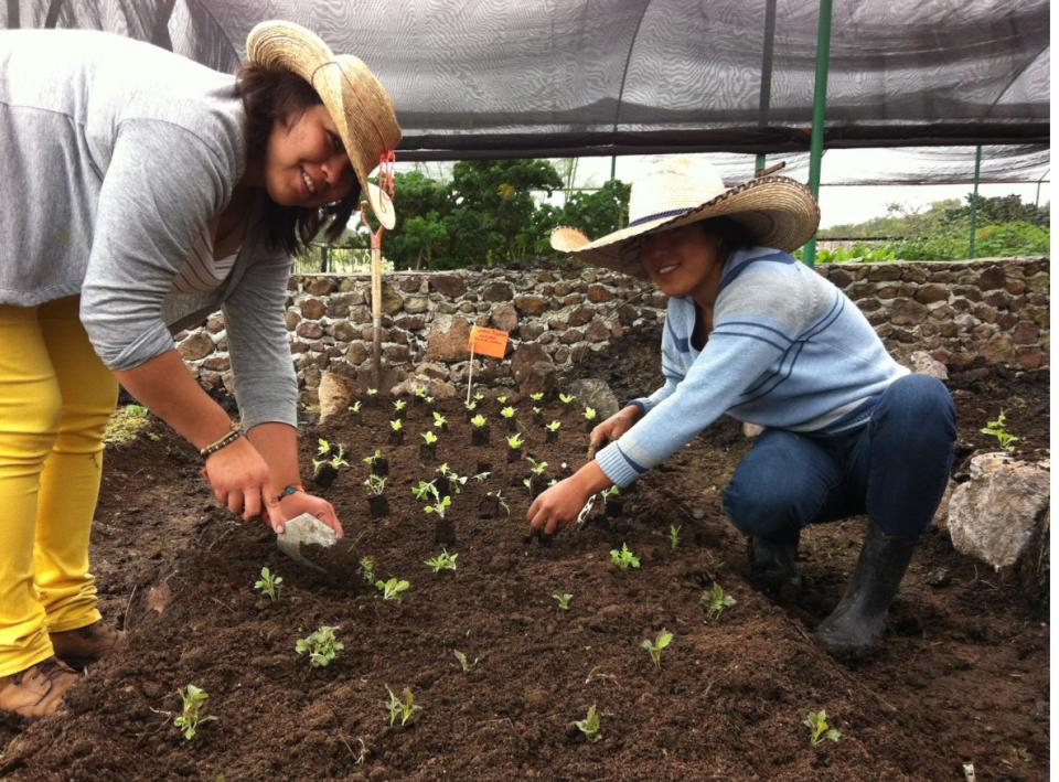 Consejos para iniciar un semillero en casa v a org nica - Tierra para semilleros ...