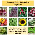Conservación de 10 Semillas Populares