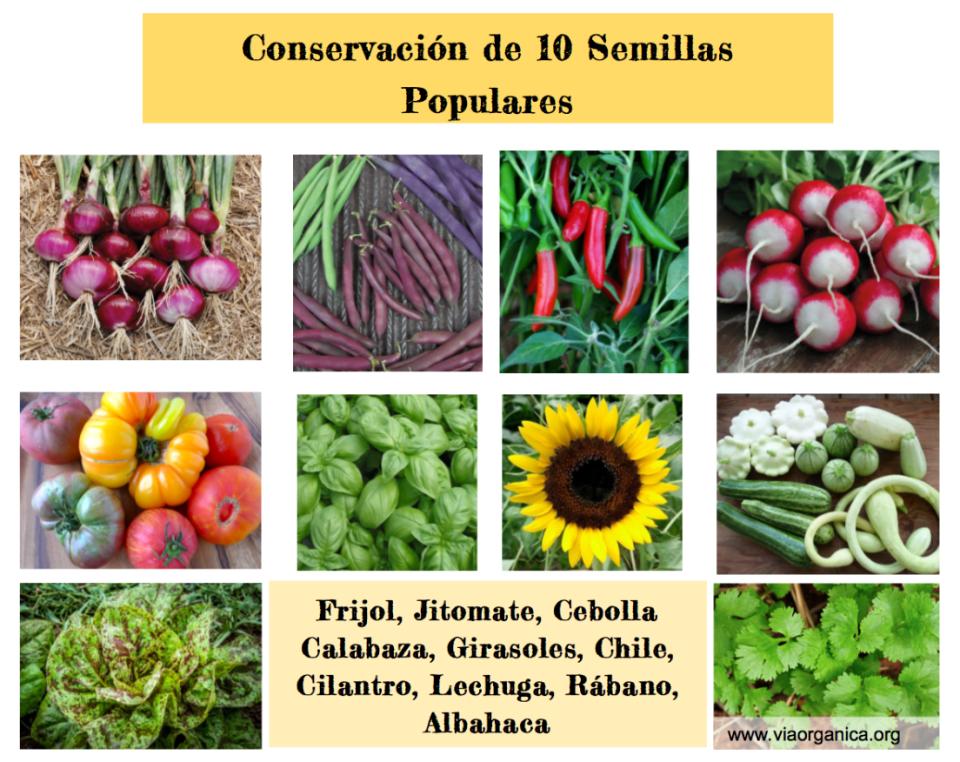 Conservación De 10 Semillas Populares Vía Orgánica