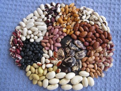 Variedades de frijol. Por prietasnotes.blogspot.com