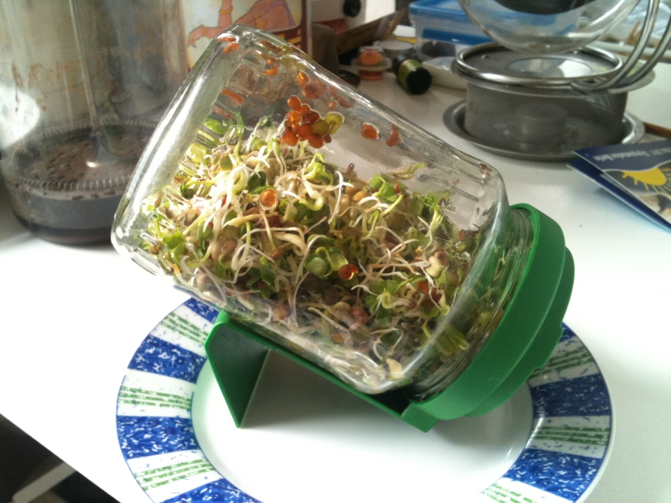 Growing_bean_sprouts