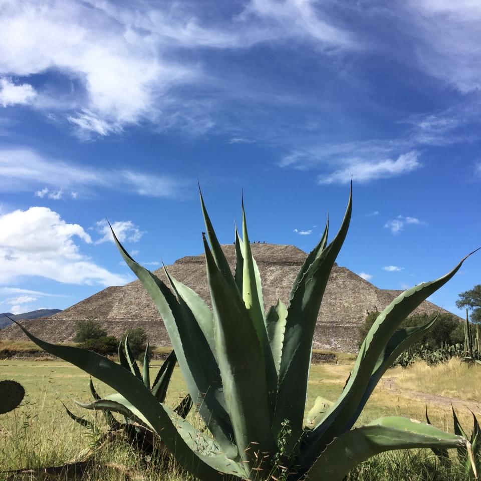 """Conocido como la """"Bebida de los Dioses,"""" la élite azteca estaba al tanto de las propiedades nutritivas del pulque, reservándolo para ceremonias y rituales, las madres que se encontraran amamantando y los ancianos."""