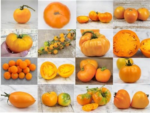 Jitomates naranjas
