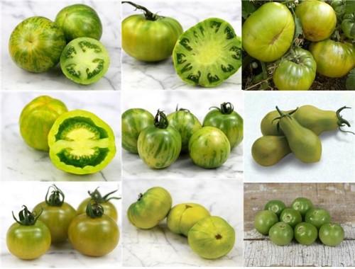 Jitomates verdes