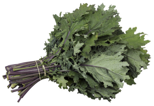 Kale ruso rojo
