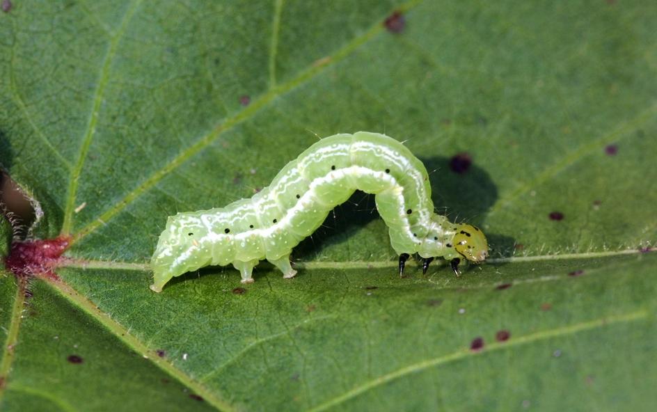 Resultado de imagen de larvas