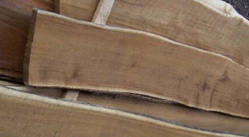 Madera de huizache. Por YAG, madera tropical