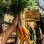 Cómo Cultivar Zanahoria Orgánica en Casa