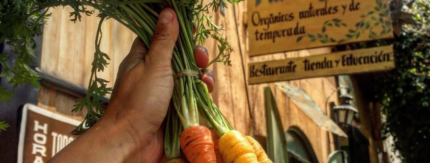 Como Cultivar Zanahoria Organica En Casa Via Organica Yakuza fans when they see a child by themselves. cultivar zanahoria organica en casa
