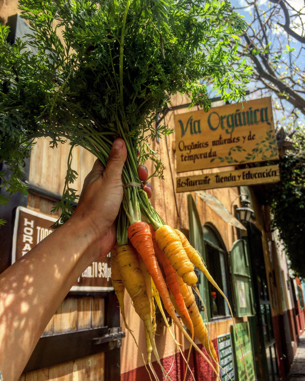 Como Cultivar Zanahoria Organica En Casa Via Organica Es el mayor lago de agua dulce del mundo con una superficie de 82.414 kilómetros cuadrados. cultivar zanahoria organica en casa
