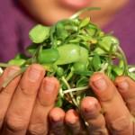 ¡Por un mundo sin plaguicidas y favoreciendo las producciones agroecológicas!