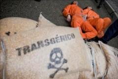 Las empresas de transgénicos nos hacen creer una cosa, pero ante la justicia reconocen la realidad