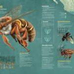 Los cultivos transgénicos están acabando con la selva y los apiarios en Campeche