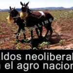 Saldos neoliberales en el agro nacional