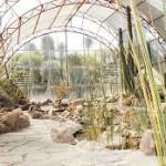 Cumple 25 años el jardín botánico El Charco del Ingenio