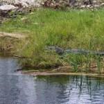 El lunes Fonatur tendrá que haber rescatado flora y trasladado fauna de Tajamar