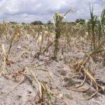 Cambio climático afecta más al agro y amenaza la seguridad alimentaria de AL