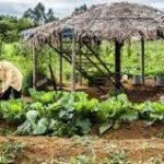 OCDE-FAO: América Latina y el Caribe podría erradicar el hambre al año 2025