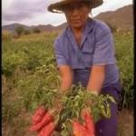 Otra mirada al campo: pobreza y potencial productivo