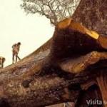 La humanidad ha talado la mitad de los árboles del mundo: estudio