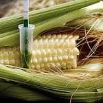 Sobre los alimentos transgénicos, lo que importa es el producto final y no el proceso