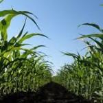 Como milpa defendemos nuestro maíz y construimos el futuro