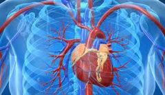 Mueren al año 150 mil mexicanos por enfermedades cardiovasculares