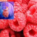 Frambuesas, anticancerígenas, antiinflamatorias y antimicrobianas