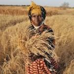 La violencia es una amenaza para la lucha contra el hambre: FAO